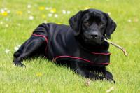Rambo Ionic Hundedecke schwarz