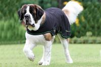 Sportz-Vibe Hundedecke